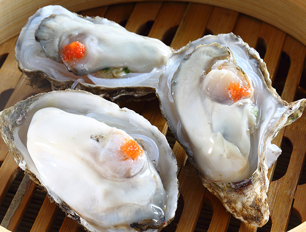 Oyster--Ostreidae